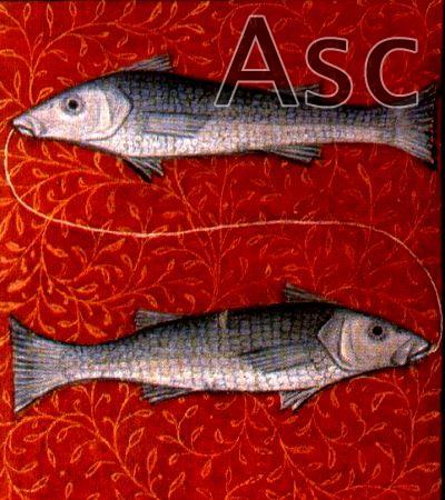 Podznak Ribe